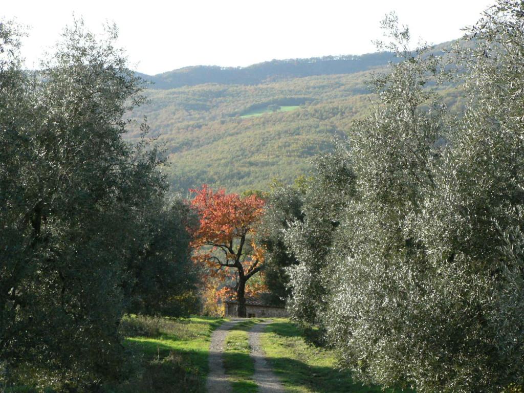 strada per Ciliegi